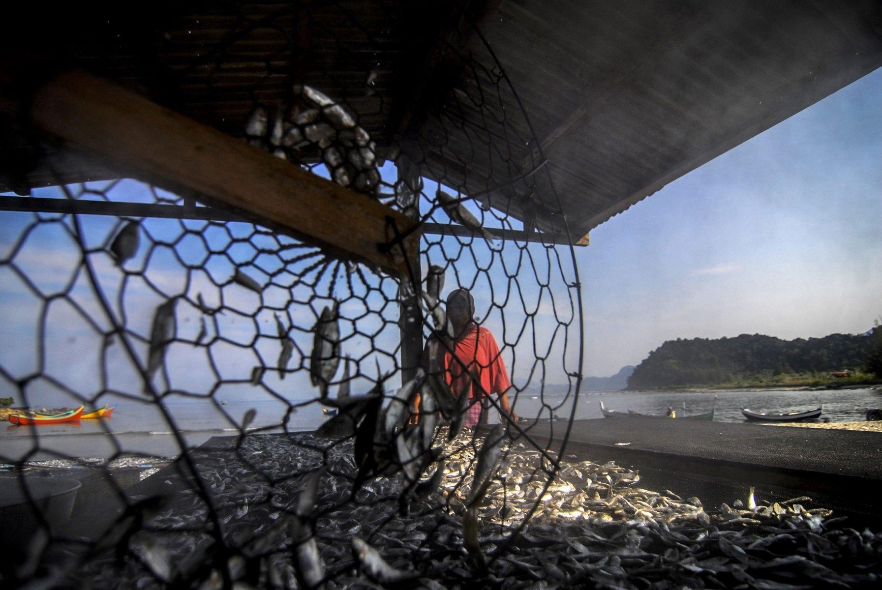 Pekerja mengolah ikan di Teluk Lhok Seudu, Sabtu (7/3/2015). Teluk Lhok Seudu dikenal sebagai sentra produksi ikan kering di Provinsi Aceh.