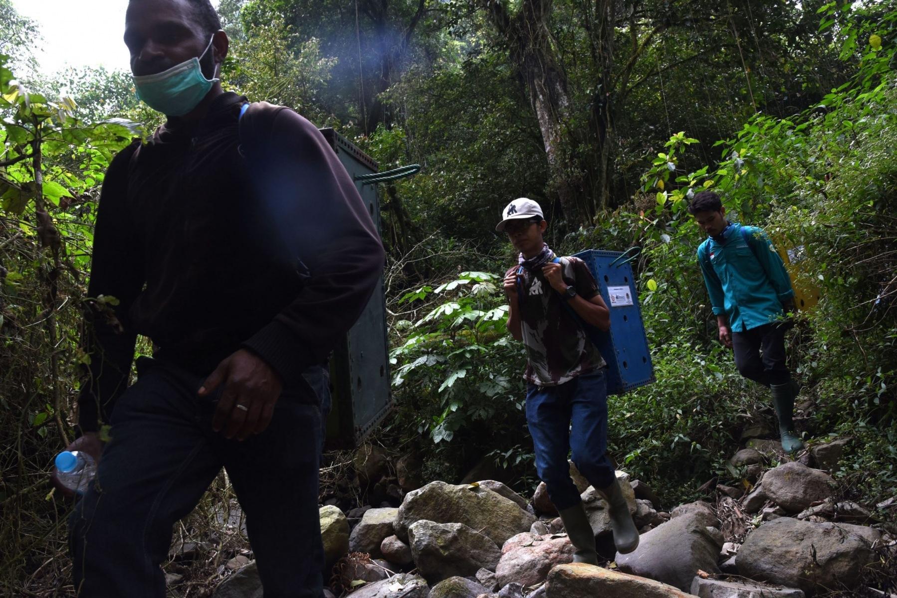 Sejumlah relawan membawa box atau kandang pemindahan berisi satwa Lutung Jawa yang akan dilepasliarkan di kawasan Tahura R. Soerjo, Batu, Jawa Timur 31 Agustus 2019.