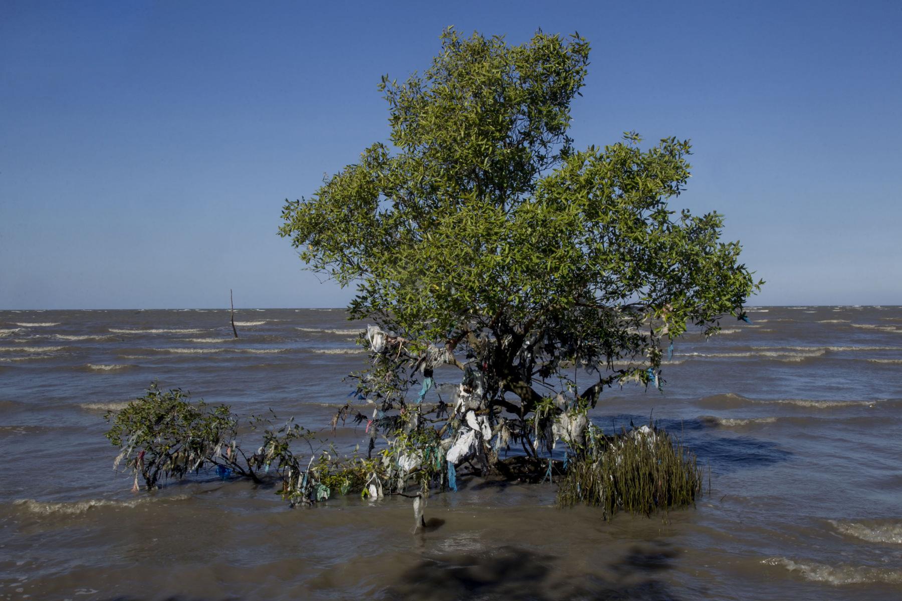 Hutan mangrove atau bakau merupakan komunitas vegetasi di pantai tropis yang memiliki banyak fungsi dan manfaat, menjadi habitat berbagai jenis satwa, pelindung terhadap bencana alam, penambah unsur hara, penyerap karbon (CO2),memelihara iklim mikro atau menjaga kelembaban dan curah hujan. Dalam satu dekade terakhir kondisi hutan mangrove di Indonesia sudah pada tingkat yang kritis yang mengalami kerusakan mencapai lebih dari 60 persen dari total areal hutan mangrove yaitu 8,6 juta hektar.