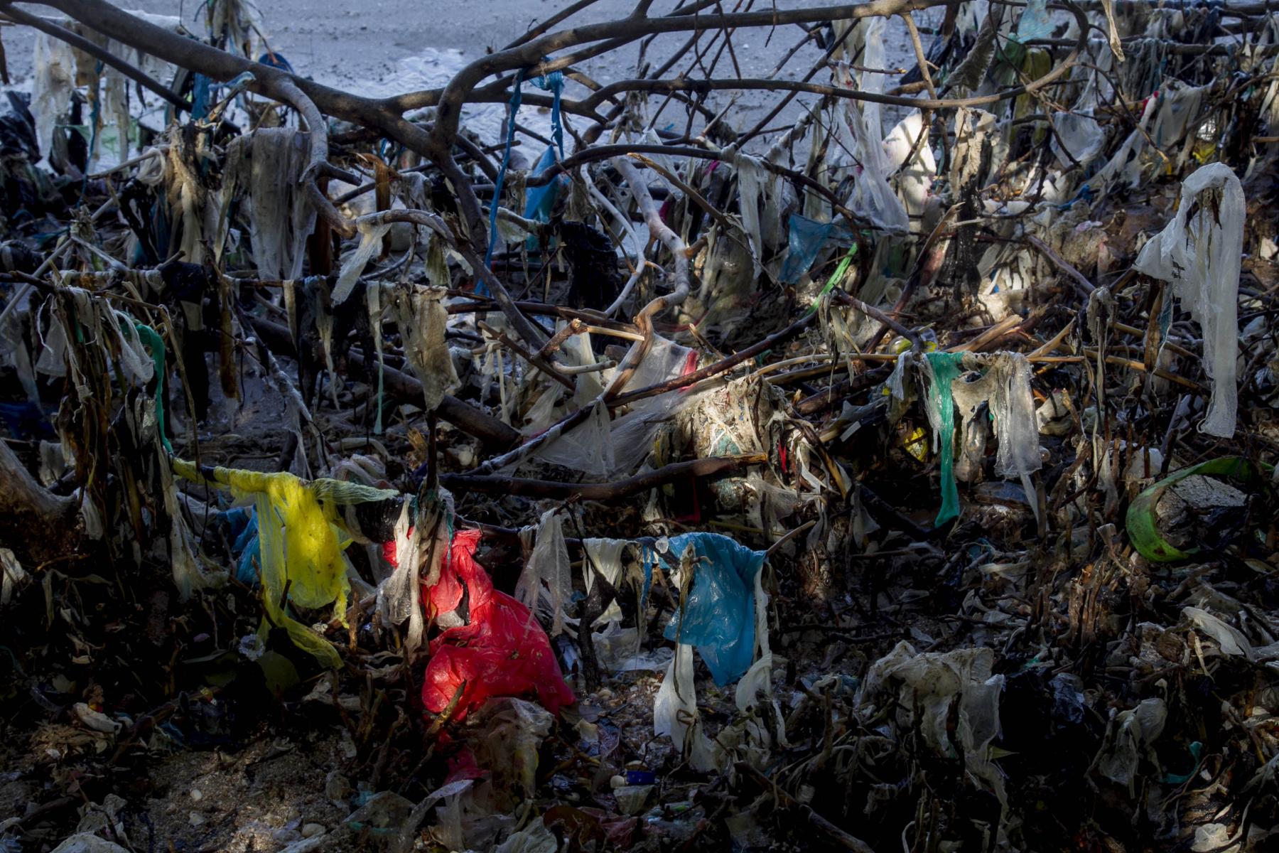 Sampah plastik yang terjebak di mangrove mengganggu pertumbuhan bibit-bibit mangrove yang baru, sehingga proses regenerasi vegetasi mangrove tidak berjalan dengan baik karena adanya tumpukan sampah non-organik menghalangi masuknya unsur hara yang berasal dari aktivitas pasang surut.