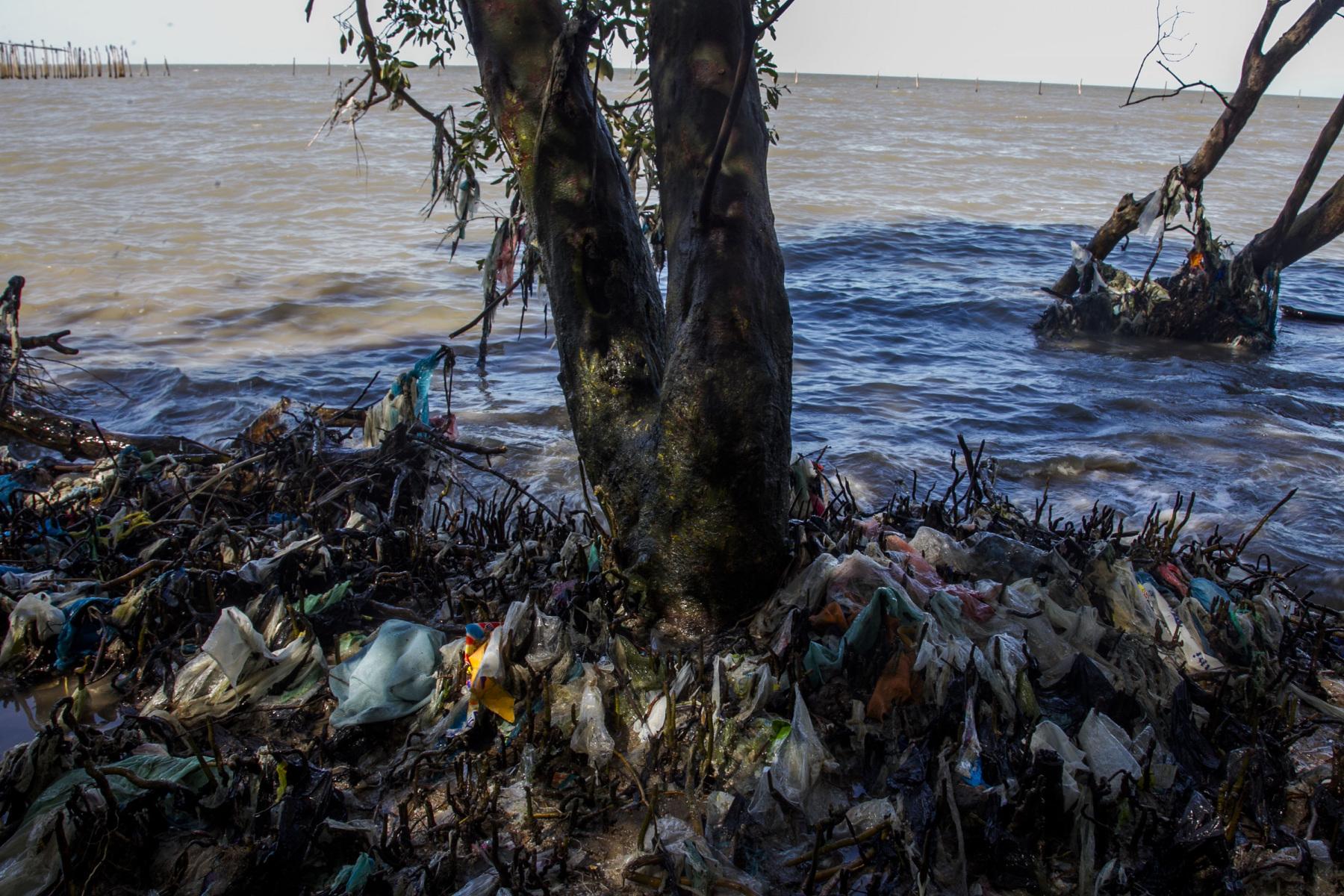 Para peneliti menghitung rata-rata 27 buah plastik per meter persegi, sebagian besar dari daerah setempat, menutup hingga 50% dari area bawah hutan mangrove. Sampel inti tanah menunjukkan bahwa plastik sering terjebak di lapisan sedimen atas, menyebabkan kondisi oksigen menjadi rendah yang berkepanjangan.