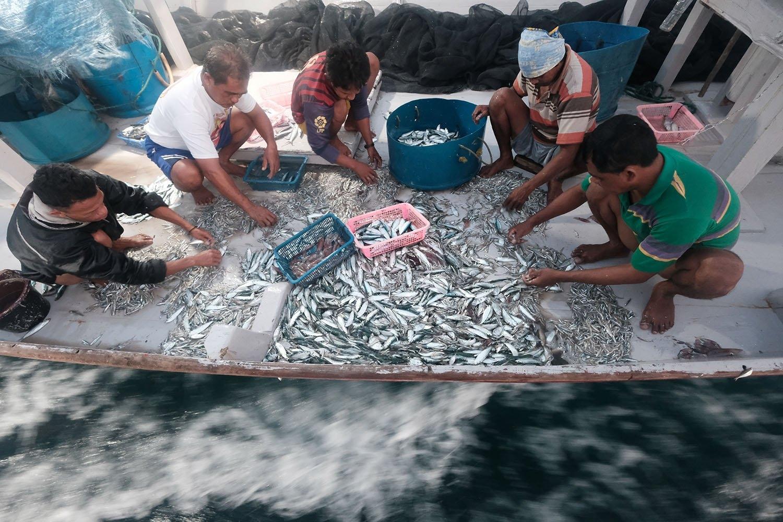 Nelayan asli desa Tanjung Binga menyortir ikan tangkapan hasil melaut pada 28 Juli 2020. JP/Donny Fernando
